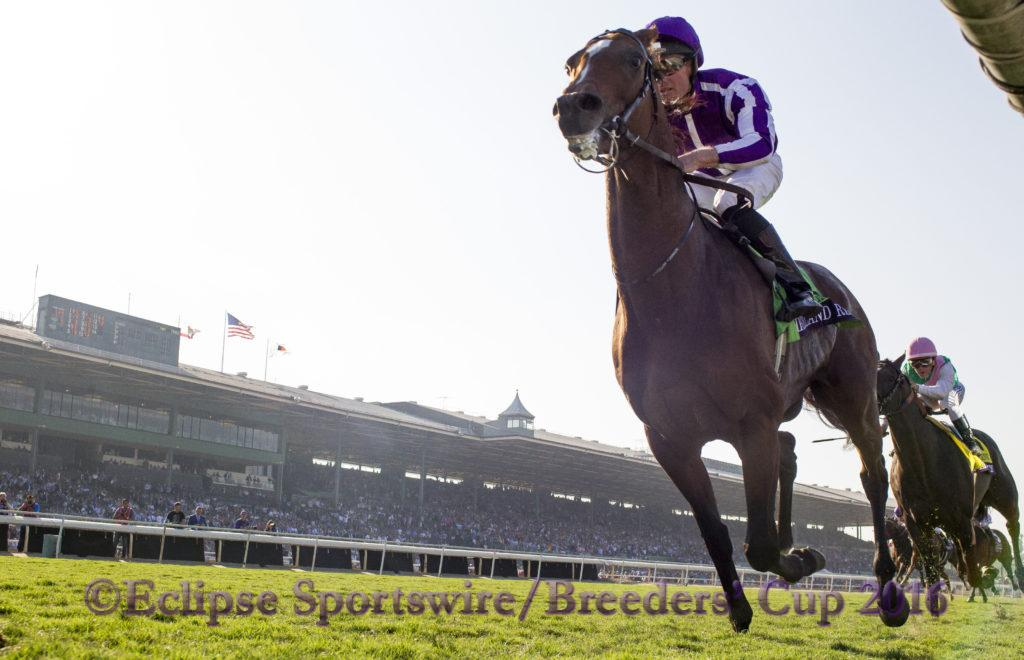 ARCADIA, CA - NOVEMBER 5: Highland Reel #12, ridden by Seamus Heffernan, celebrates winning the Longines Breeders' Cup Turf during day two of the 2016 Breeders' Cup World Championships at Santa Anita Park on November 5, 2016 in Arcadia, California. (Photo by Alex Evers/Eclipse Sportswire/Breeders Cup)