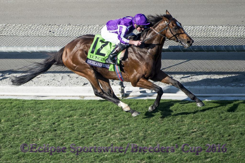 ARCADIA, CA - NOVEMBER 5: Highland Reel #12, ridden by Seamus Heffernan, celebrates winning the Longines Breeders' Cup Turf during day two of the 2016 Breeders' Cup World Championships at Santa Anita Park on November 5, 2016 in Arcadia, California. (Photo by Michael McInally/Eclipse Sportswire/Breeders Cup)