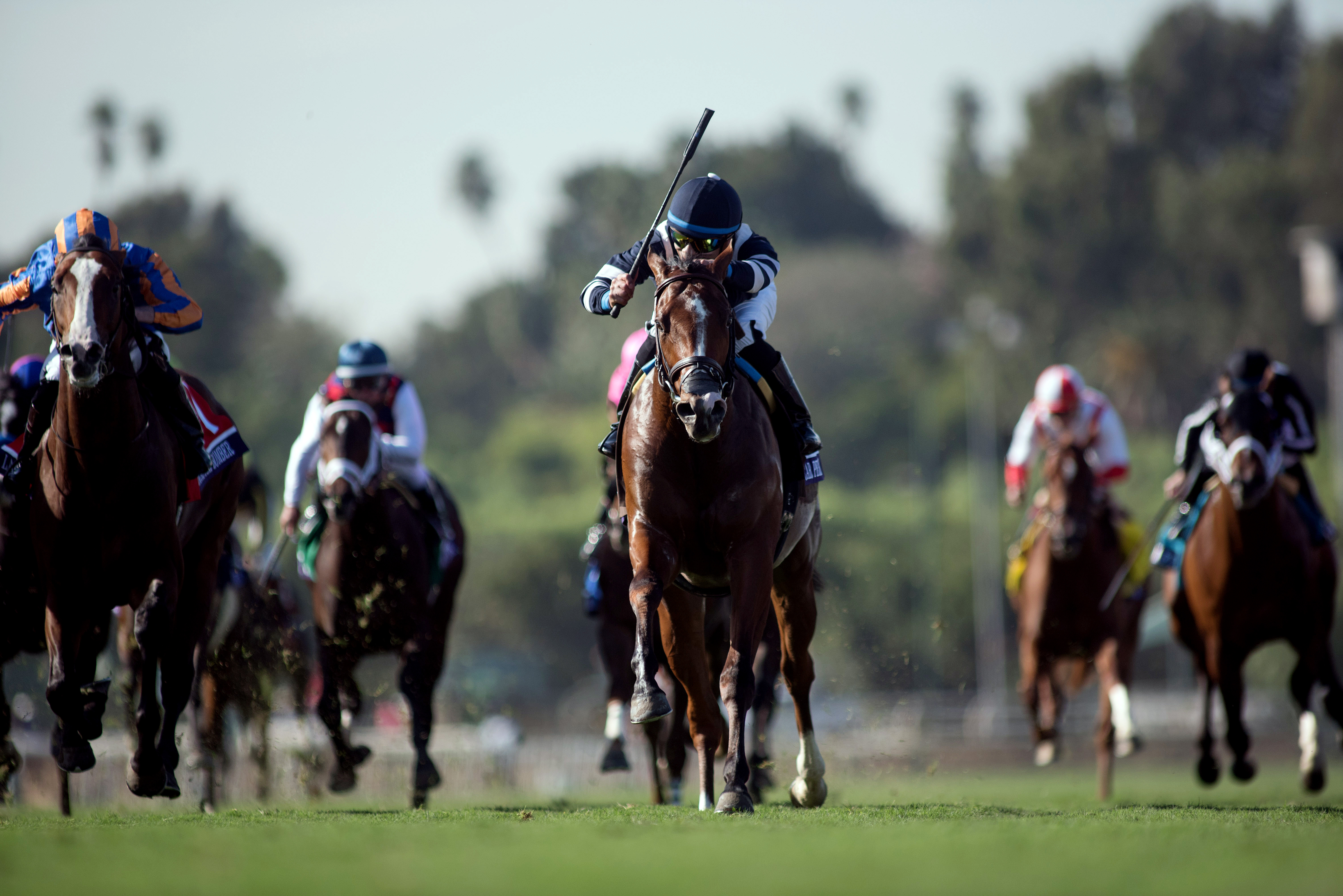 Breeders Cup Juvenile Turf Oscar Performance 2